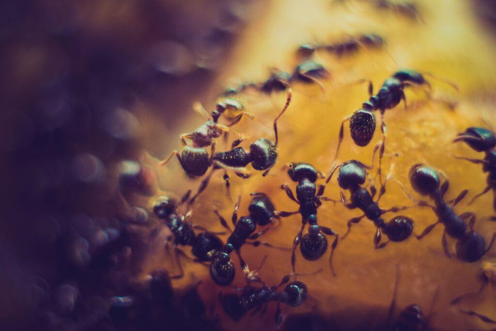 Formiche-vive-nel-piatto
